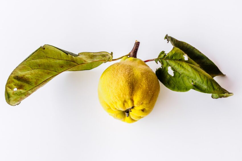 yellow fruit with green leaves on white surface